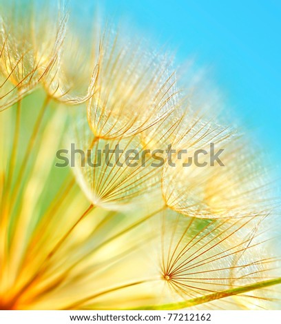 Soft dandelion flowers macro border over sky blue background