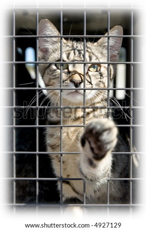 Soft edge on a photo of an orphaned kitten in a cage, reaching out with a paw