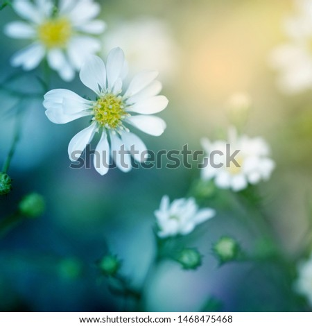 Soft flowers in soft style. Beautiful Flower on soft sparkle in soft focus with filter colors use for background.