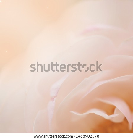 Soft flowers in soft style. Beautiful Flowers on soft sparkle in soft focus with filter colors use for Love and Valentine's Day Concept background. Orange of rose.