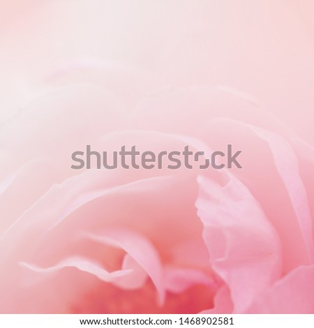 Soft flowers in soft style. Beautiful Flowers on soft sparkle in soft focus with filter colors use for Love and Valentine's Day Concept background. Rose flower.