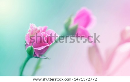 Soft flowers in soft style. Beautiful Flowers on soft sparkle in soft focus with filter colors use for Love and Valentine's Day Concept background. Flowers background.