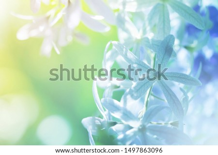 Soft flowers in soft style. Beautiful Flowers on soft sparkle in soft focus with filter colors use for Love and Valentine's Day, wedding and love Concept background.