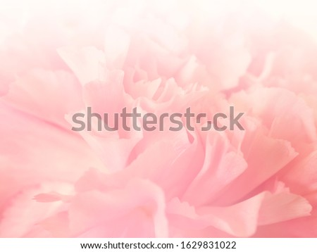 Soft flowers in soft style. Beautiful Flowers on soft sparkle in soft focus with filter colors use for Love and Valentine's Day, wedding and love Concept background. Vintage flowers.