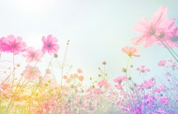 Soft focus and blurred cosmos flowers on pastel color style for background