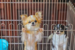 Soft focus and blurred dog in captivity