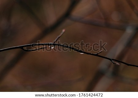 soft focus autumn time floral nature scenic view of water drop after rain on bare tree branch blurred background environment space  Foto stock ©