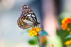 Soft focus. Butterfly on flowers , beautiful butterfly & flower in the garden.