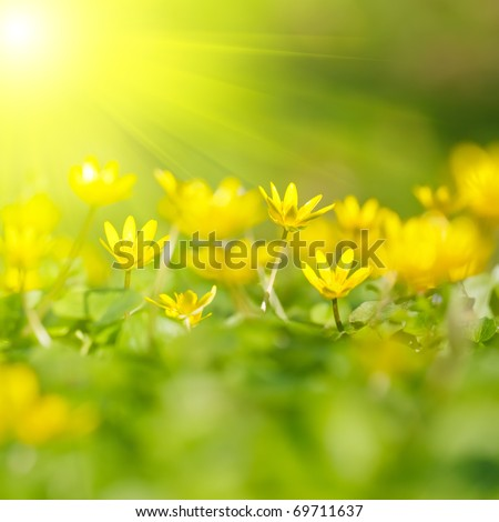 Soft-focus close-up of yellow flowers - stock photo
