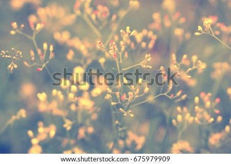 Soft focus Grass Flower  Abstract  spring ,nature background - Shutterstock ID 675979909
