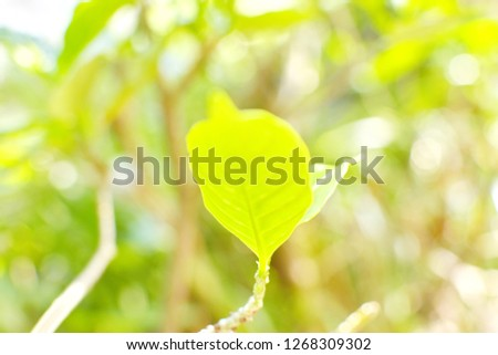 Soft focus growing leaf of tree, small branch with leaves blurry green nature bokeh background, environment love earth day concept, very soft focus   #1268309302