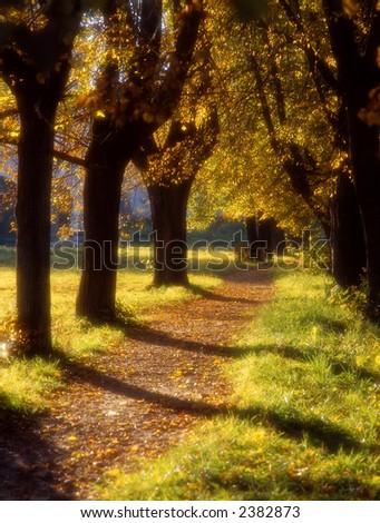 Soft focus image of autumn avenue in a decline light