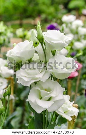 Free Photos Soft Focus Of Bouquet Of Lisianthus Eustoma Flowers In