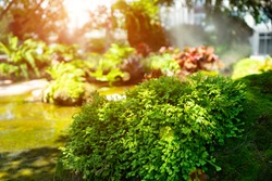 Soft focus of Green natural moss on old stone with sunlight background. Abstract of stone with fern leaf after rain. Green moss at small waterfall that moisture and steam fog at the garden.
