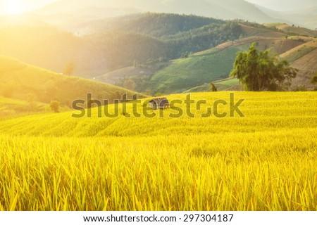 soft focus of rice farm landscape on day noon light. ストックフォト ©