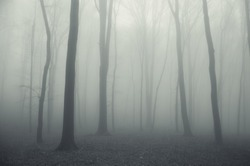 soft forest background
