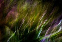 Soft, gentle, warm mountainside vegetation light-streak pattern in shades of green, purple and white  - abstract, motion-blurred background texture