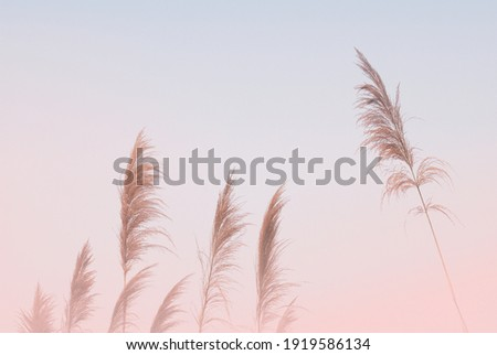 Soft gently wind grass flowers in aesthetic nature of early morning misty sky background. Quiet and calm image in minimal zen mood. Spring nature in pastel tone. ストックフォト ©