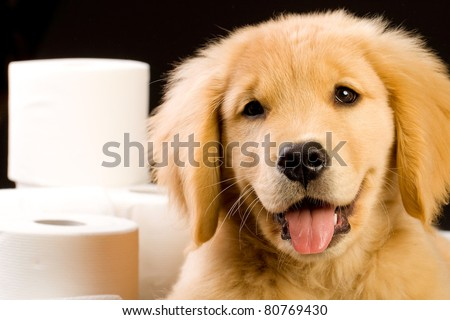 essay golden retriever Dog breeds – essay sample  golden retriever is an adorable, mannerly, clever dog that can be trained easily and is extremely tender and tolerant with children.