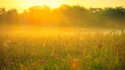 Soft image of meadow with spring flowers in sunlight early in the morning, during sunrise, with blurred background and nice pastel warm yellow colors