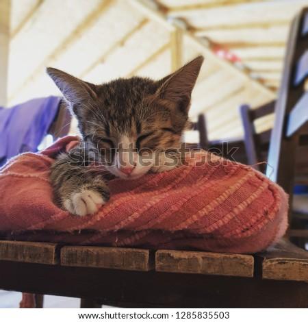 soft kitty warm kitty little ball of fur #1285835503