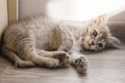 Soft kitty, warm kitty, Little ball of fur, Happy kitty, sleepy kitty, Purr, purr, purr