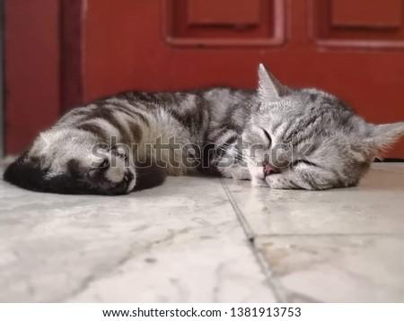 Soft kitty, warm kitty, sleeping kitty #1381913753