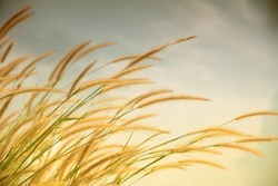 soft light tone, Abstract meadow background with grass at summer, Vintage Warm tones