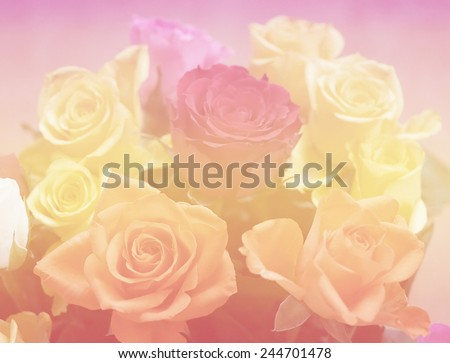 soft love color nature single flowers rose backgrounds closeup