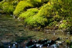 Soft moss on the stones in the mountain river