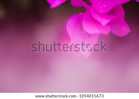 Soft or dreaming style of bougainvillea flowers background #1054015673
