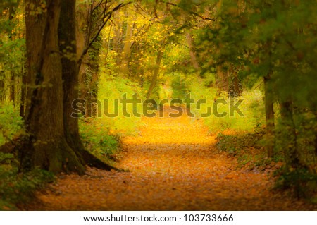 Soft pastel with autumn foliage in a forest