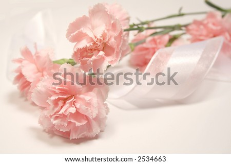 Soft pink carnations and white silky ribbon - stock photo