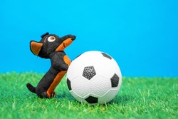 Soft plaything in shape of funny little dachshund dog put its front paws on toy soccer ball lying on green grass of artificial turf, blue background, front view, close up