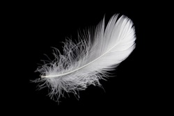 Soft single white feather isolated on black background