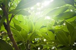 Soft sun rays through thick plants