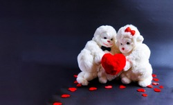 Soft toy monkeys holding a heart on a black background. A symbol of love. valentine's day