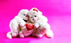Soft toy monkeys holding a heart on a pink background. A symbol of love. valentine's day