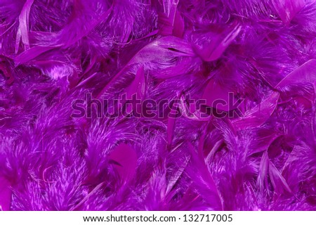 soft violet feathers, background