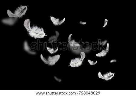 Soft white feathers floating in the air on the dark, black background