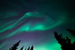 Softly shaped northern ligths above tops of fir trees. Green aurora borealis on dark sky over spruce trees silhouettes.