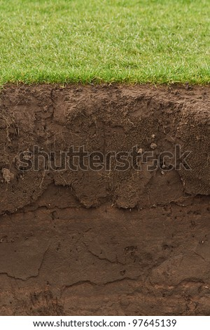 Soil and grass cross section