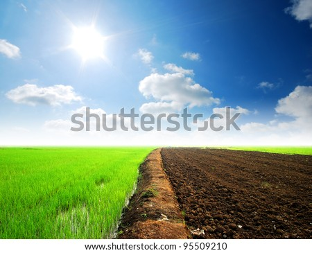 Soil Background mud puddle marsh well blue sky rice green grass