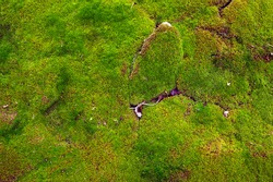 Soil covered of green soft moss