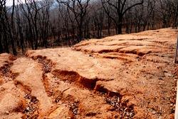 Soil erosion, roadside slope. Roadside hillside, furrowed by deep gullies from the rain on autumn trees background.