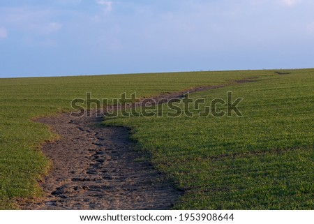 Soil erosion. The rains have eroded the soil in the agricultural field. Formation of ravines in the field due to rainwater runoff. Photo stock ©