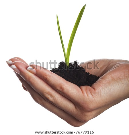 Soil in hand, isolated on white background