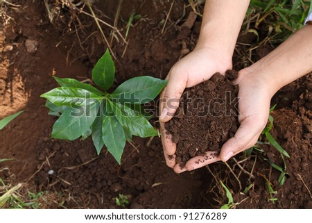 soil in hand planting of trees
