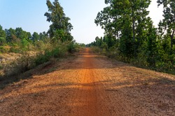 soil made village roads have gone inside the jungle surrounded by Green trees under blue sky at Indian Village, red road have gone inside the village forest, green trees, trees, Indian road