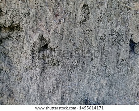 Soil texture background, Soil background, Texture of soil surface. #1455614171